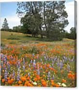 Wildflower Wonderland 3 Canvas Print