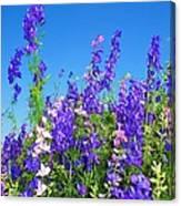 Wildflowers #11 Canvas Print