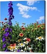 Wildflowers #7 Canvas Print