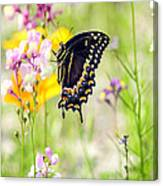 Wildflowers And Butterfly Canvas Print