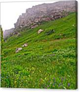 Wildflowers And Mountainous Bluffs At Point Amour In Labrador Canvas Print