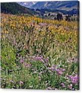 Wildflowers And Mountains  Canvas Print