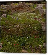 Wildflowers And Olympia Ruins   #9594 Canvas Print