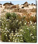 Wildflowers At Mungo National Park Canvas Print