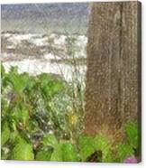 Wildflowers At The Beach Canvas Print