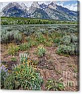 Wildflowers Bloom Below Teton Mountain  Range Canvas Print