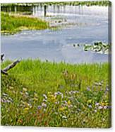 Wildflowers By Heron Pond In Grand Teton National Park-wyoming Canvas Print