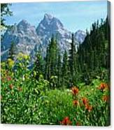 1m9372-v-wildflowers In Cascade Canyon, Tetons Canvas Print