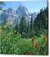 1m9371-h-wildflowers In Cascade Canyon, Tetons Canvas Print