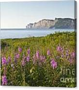 Wildflowers In Gaspe Canvas Print