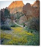 1b6430 Wildflowers In Pinnacles National Park Canvas Print