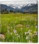 Wildflowers In Rocky Mountain National Park Canvas Print