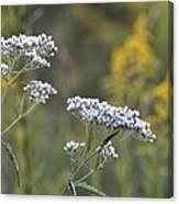 Wildflowers In September 2012 Canvas Print