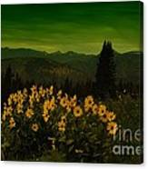 Wildflowers In The Beartooth Mountains Canvas Print