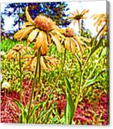 Wildflowers In The Wilds Of Colorado Canvas Print