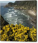 Wildflowers On An Atypical Winter's Day On The Oregon Coast Canvas Print
