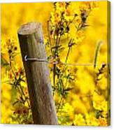 Wildflowers On Fence Post Canvas Print
