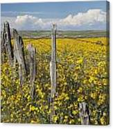 Wildflowers Surround Rustic Barb Wire Canvas Print