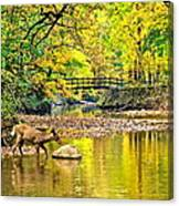 Wildlifes Thirst Canvas Print