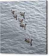 Willamette River Ducks Canvas Print