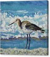 Willet Canvas Print