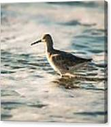 Willet Wading Through The Ocean Foam Canvas Print