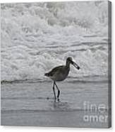 Willet With A Catch Canvas Print