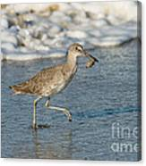 Willet With Sand Crab Canvas Print