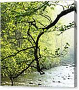 Williams River Mist Canvas Print