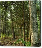 William's Woods Canvas Print