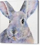 Willis Rabbit Canvas Print