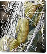 Willow Herb Seed Pod, Sem Canvas Print