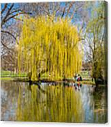 Willow Tree Water Reflection Canvas Print
