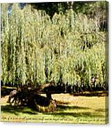 Willow Tree With Job Verse Canvas Print