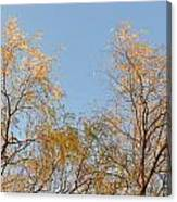 Willows And Sky Canvas Print