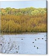 Willows Of October Canvas Print