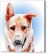 Willy A Former Shelter Sweetie Canvas Print