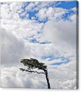 Wind-bent Flag Tree In Tierra Del Fuego Canvas Print