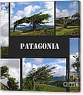 Wind-bent Flag Trees In Tierra Del Fuego Canvas Print