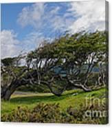 Wind-bent Tree In Tierra Del Fuego Patagonia  Canvas Print