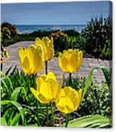 Wind Point Tulips Canvas Print