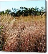 Windswept Grassy Meadow Canvas Print