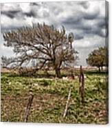 Wind Swept Kansas Tree Canvas Print