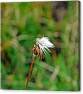 Winded White Canvas Print