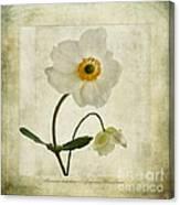 Windflowers Canvas Print