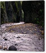 Winding Through Oneonta  Gorge Canvas Print