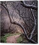 Winding Trail Canvas Print