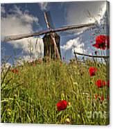 Windmill Poppies  Canvas Print