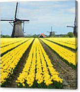 Windmills And Tulips Canvas Print