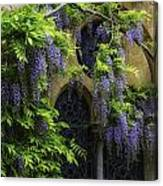 Window Behind Wisteria Canvas Print